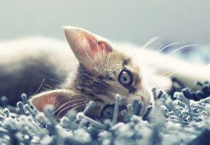 When Do I Stop Feeding My Cat Kitten Food Purina Blue Colour Palette Color Palette Pastel Palette