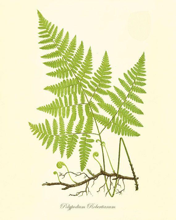 Fern art print vintage antique Botanical Art Prints Home Decor Wall ...