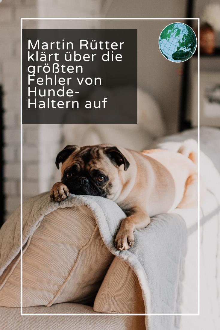 Nicht 24 Stunden Zwangsbekuscheln Martin Rutter Uber Die Grossten Fehler Von Haltern Hunde Erziehen Hundeerziehung Franzosische Bulldoggenbabys