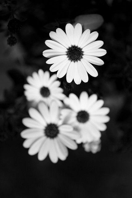 White Flowers Pinterest Negro Sobres Negros Y Blanco