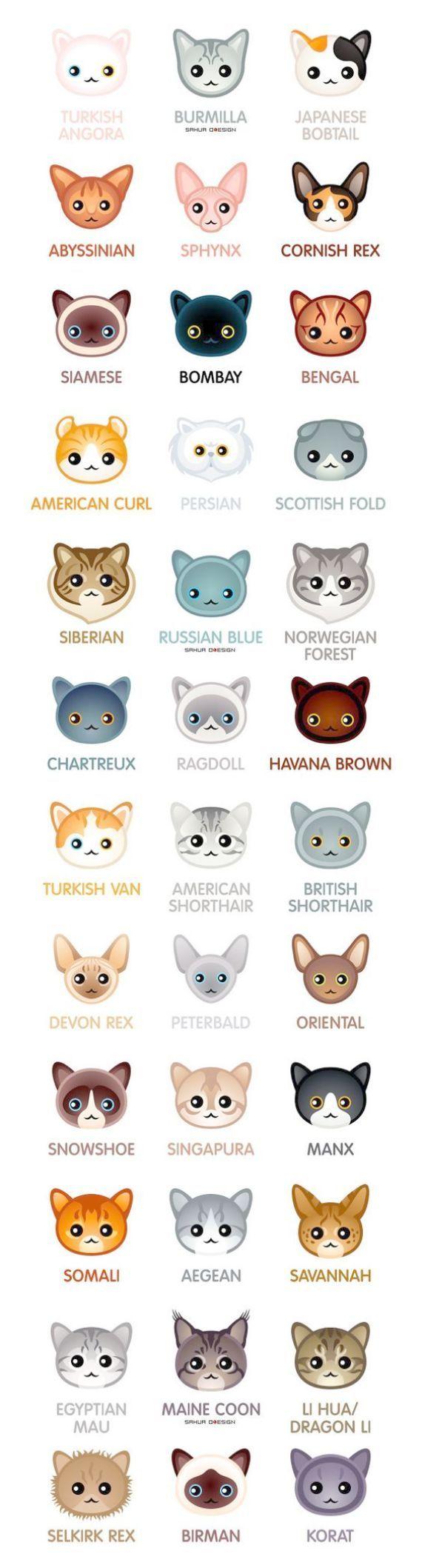 Wonderful Cute Kittens For Sale In Dubai Kjaeledyr Dyr Kattunger