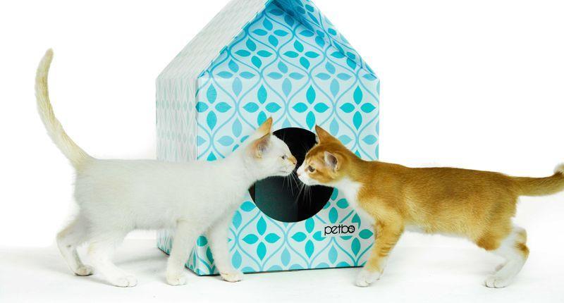 Eco Feline Homes Cat Design Cat Playhouse Crazy Cats