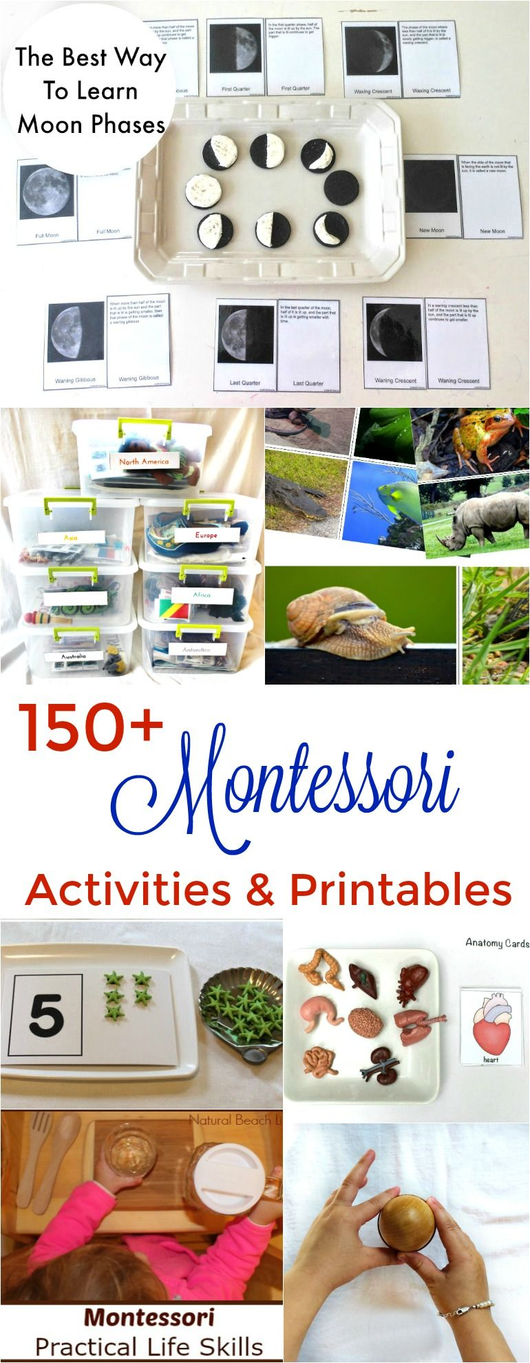150+ Amazing Montessori Activities and Free Printables