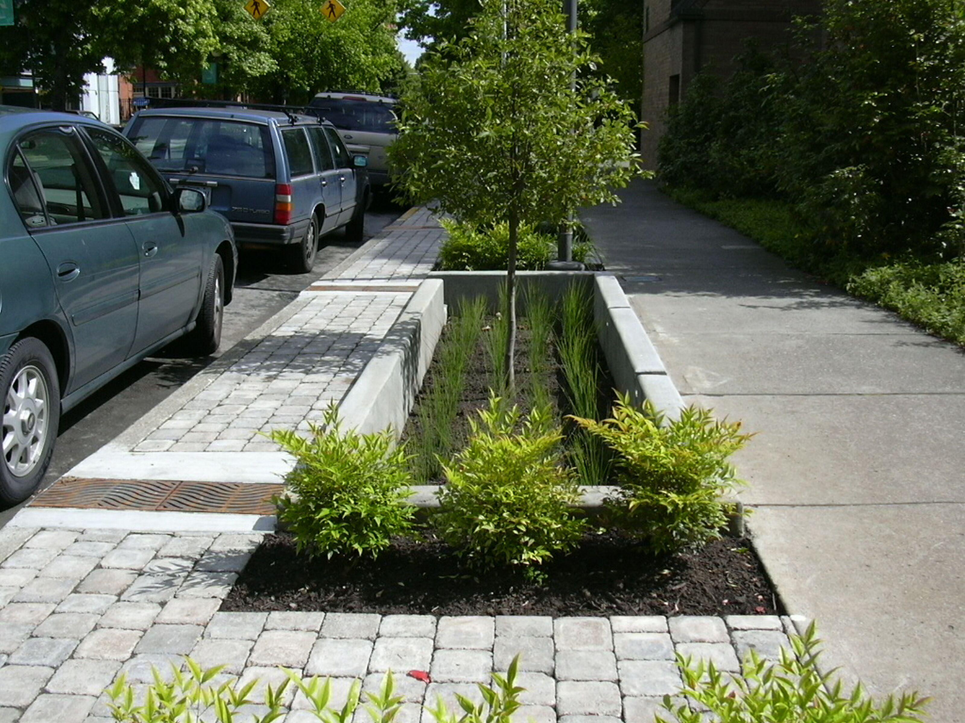 Greening Of Southwest Bike Path >> Sw 12th Avenue Green Street Project Portland Oregon Rain Garden