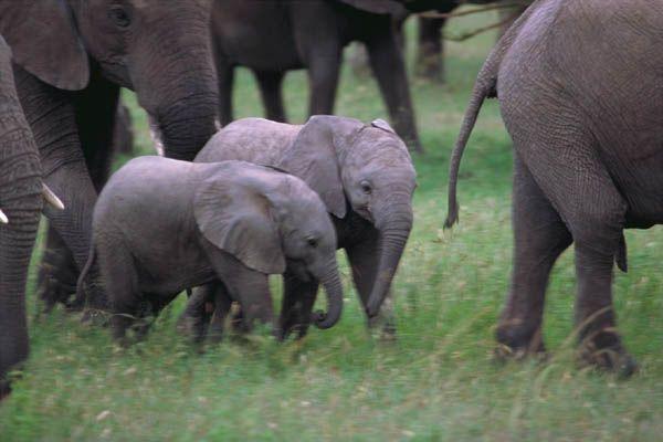 aww baby elephants