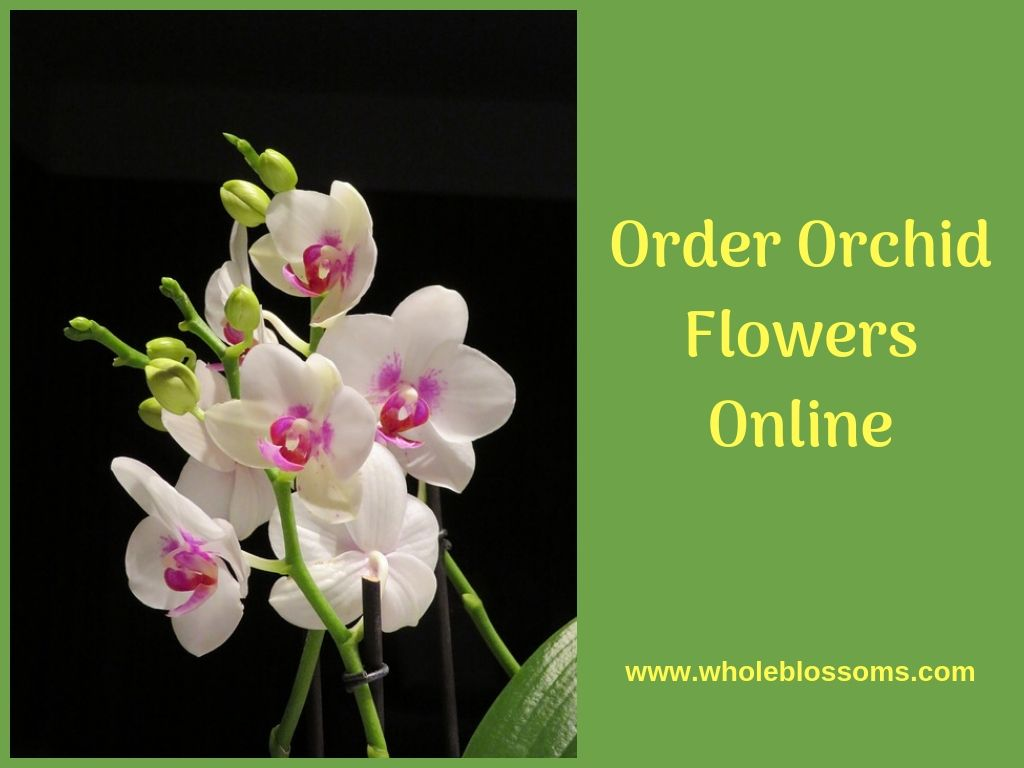 Gorgeous Orchids Online For Your Wedding Decoration Orchids Online Orchid Flower Orchids