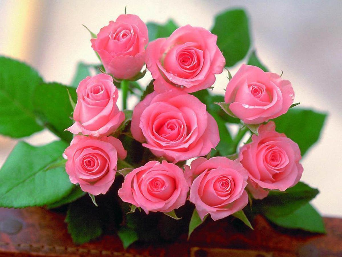 One dozen light pink roses at from you flowers Pink roses