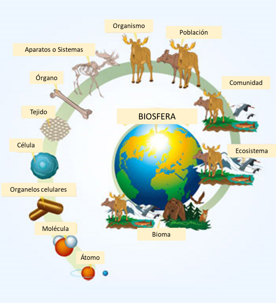 Niveles De Organización De Los Seres Vivos Resumen En 2021 Clase De Biología Niños Estudiando Libro De Biologia
