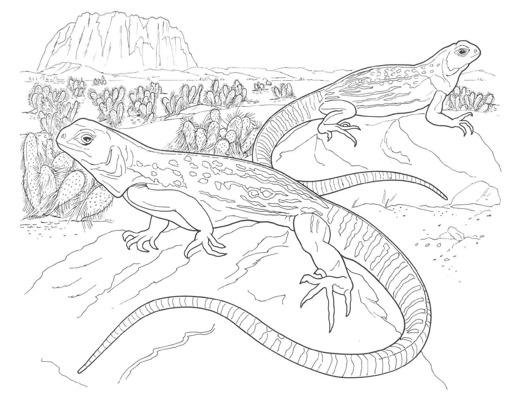 North American Wildlife Coloring Pages | Desert Animals Coloring Pages : Whitetail Pairie Dog