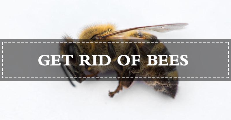 15 Fast Ways To Get Rid Of Bees Effectively Kill Or Repel Them Naturally Getting Rid Of Bees Bee Nature