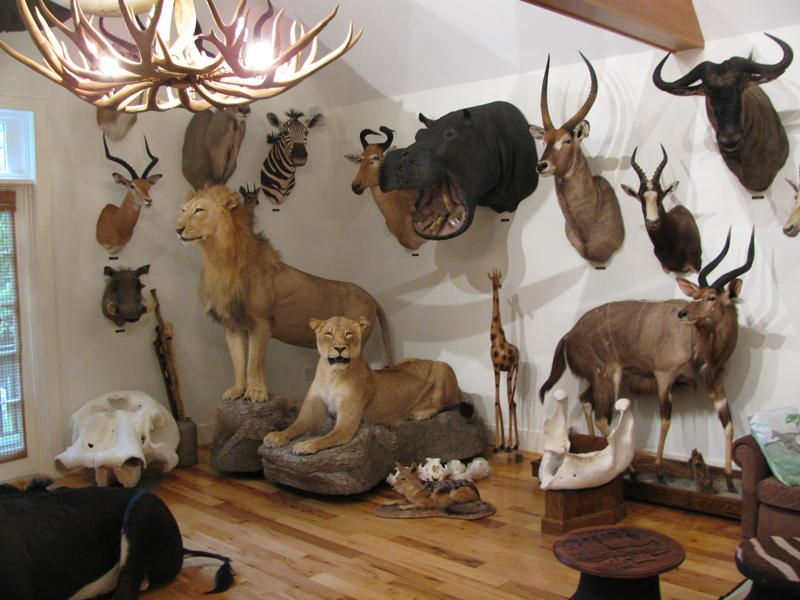 Taxidermy Trophy Room By Northeast Taxidermy Studios