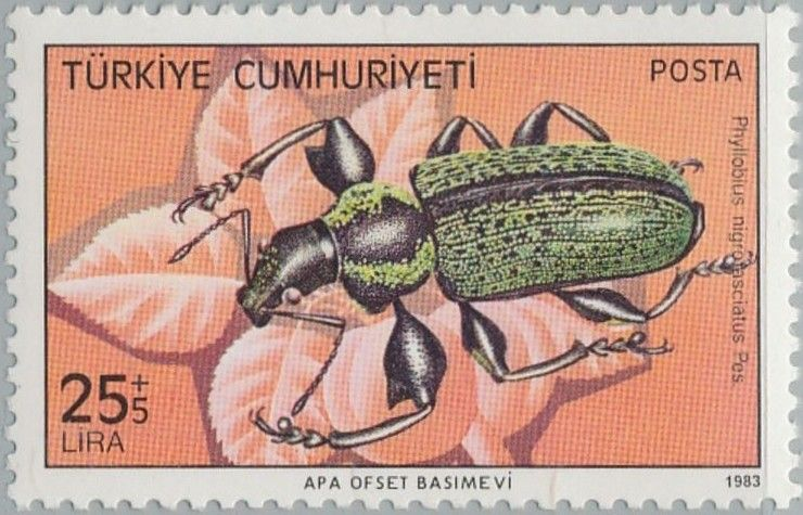 Turkey, 1983, Phyllobius nigrofasciatus