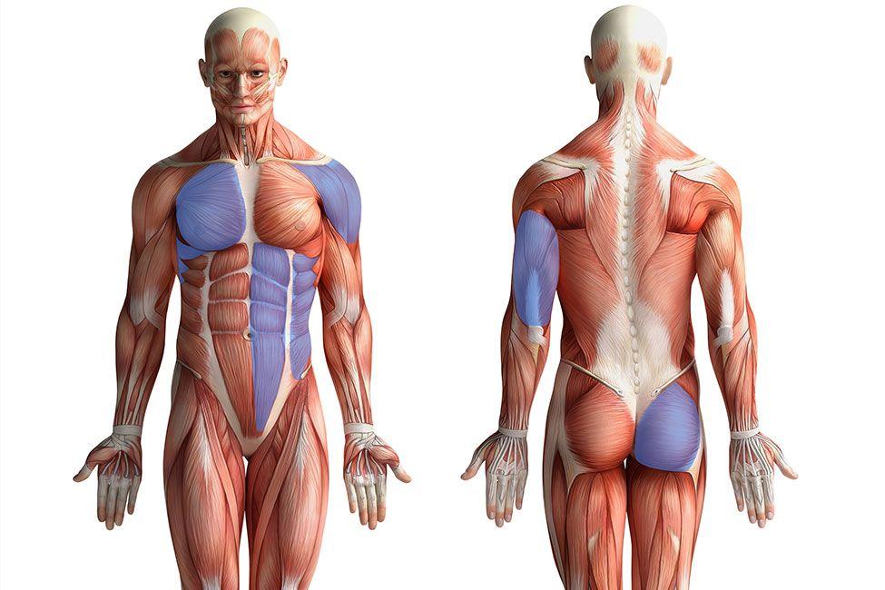 Pushups: Mehr als nur Trizeps-Training   Chest muscles, Upper body ...