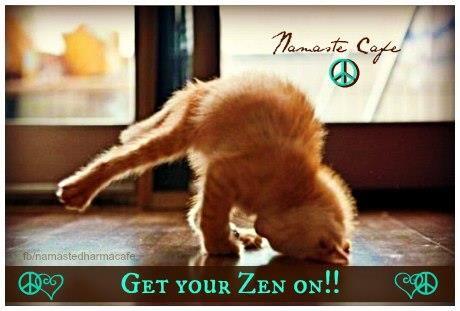 hot vinyasa yoga lion -kitty yoga!