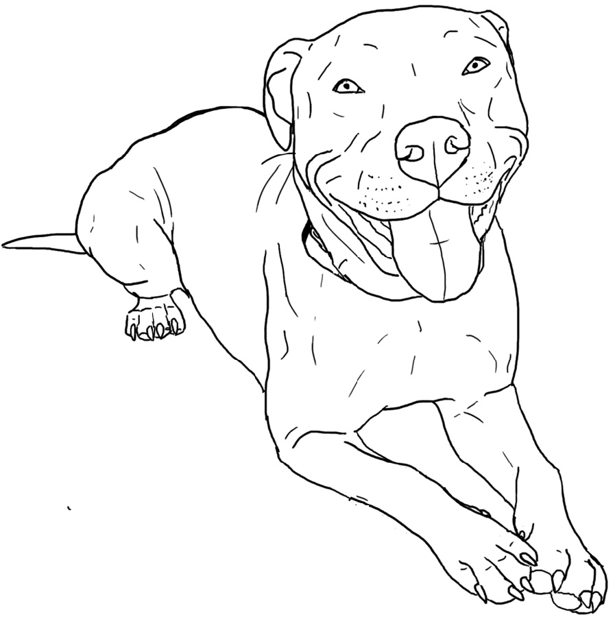 Pitbull Coloring Pages Printable In 2020 Pitbull Art Dog Coloring Page Pitbull Drawing