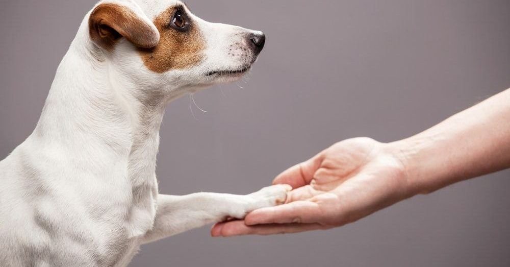 Left Pawed Dogs Shown To Be More Apprehensive Of Strangers In 2020