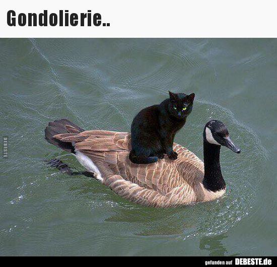 Photo of Gondoliere .. | Lustige Bilder, Sprüche, Witze, echt witzig