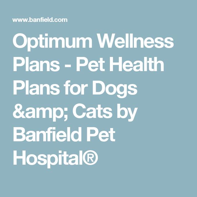 Optimum Wellness Plans Pet Health Plans For Dogs Amp Cats By Banfield Pet Hospital Dog Dental Health Pet Wellness Wellness Plan