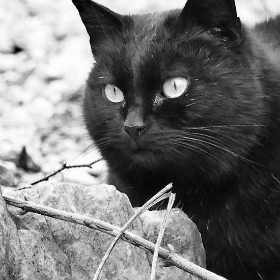 """""""Head-Bent"""" Pussy Rue (hidden behind a stone !), And I in birds tuned! but not in the same place for I  2 h) by Olao-Olavia / Okaio Créations  by fz 1000 2014"""