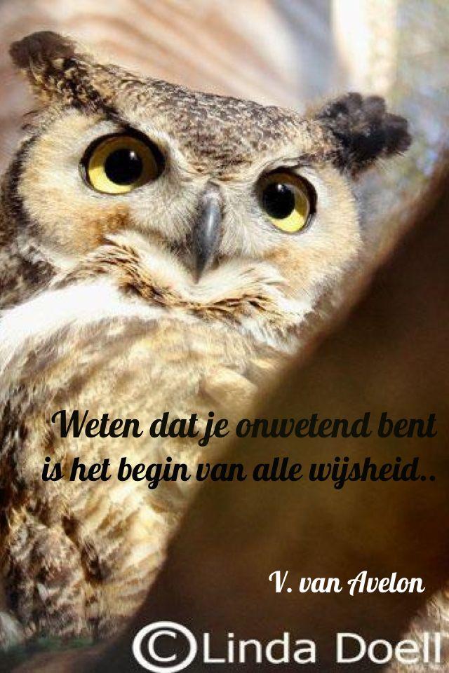 Weten Dat Je Onwetend Bent Is Het Begin Van Alle Wijsheid