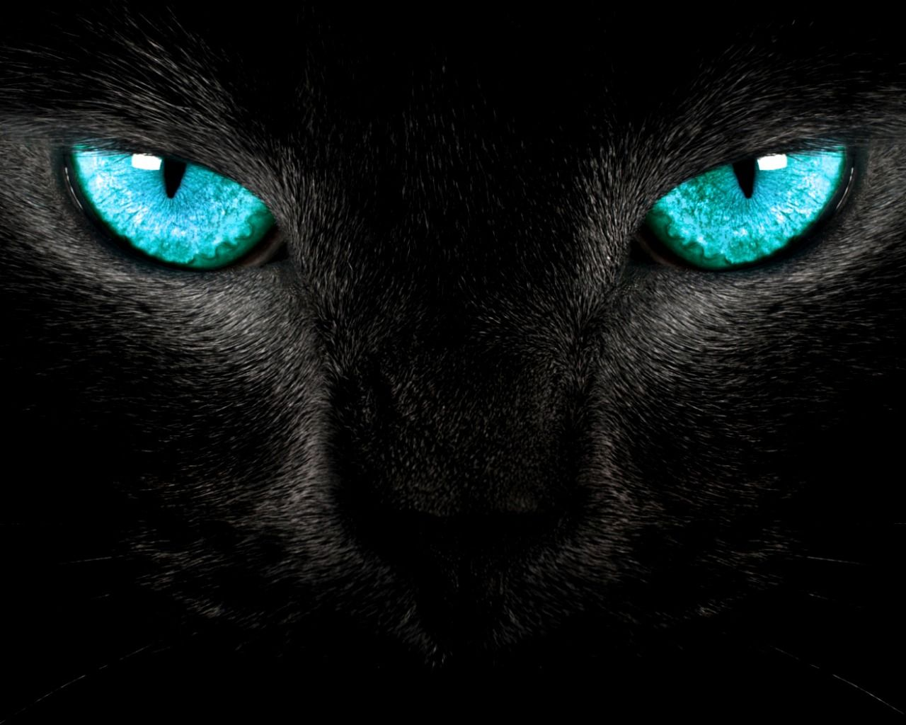 Black Cat Eyes Wallpaper: Black Cat Eyes, Eyes