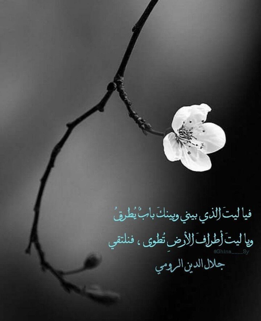 ياااليت جلال الدين الرومي Photo Quotes Arabic Quotes Love Quotes