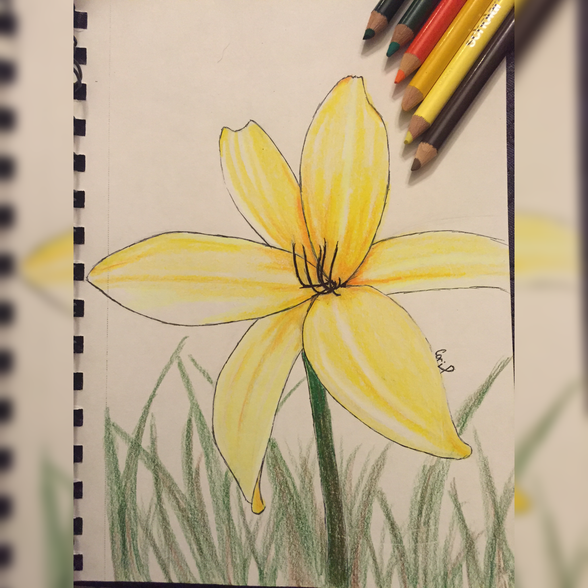 Prismacolor Sketch 2015 Yellow Flower Drawing Art Pinterest