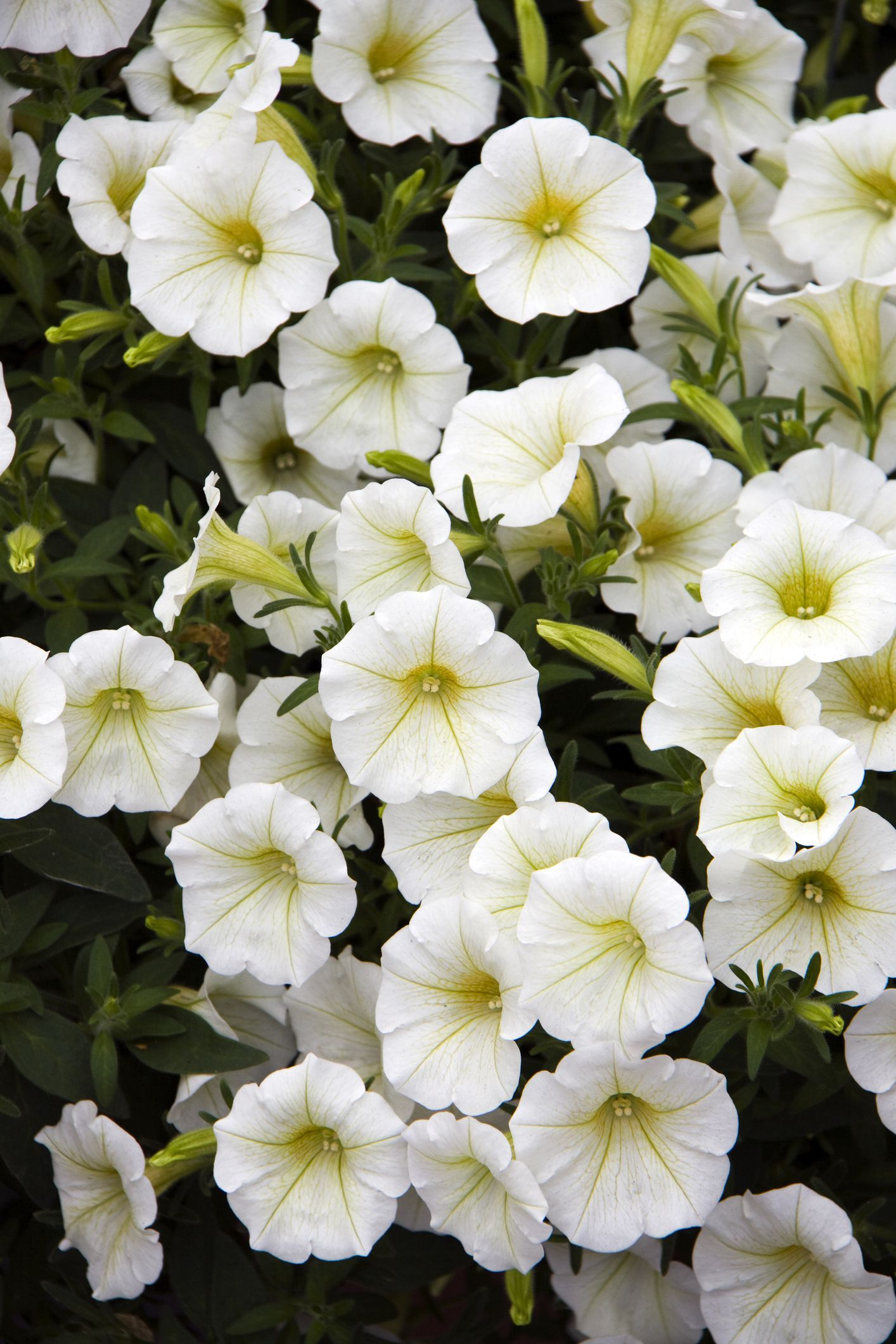 7 Fastest Growing Flower Seeds For The Perfect Summer 400 x 300