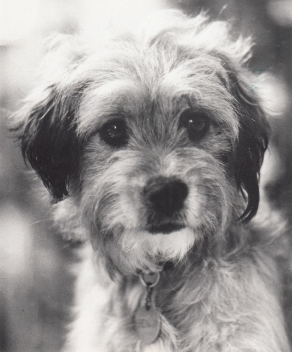 3a8537916ab5 Benji - Oh! Heavenly Dog (1980) This MUST be the reason I fell in love with  Miley. Love at first sight