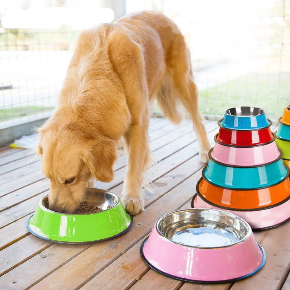 Stainless Steel Color Spray Paint Pet Dog Bowls Puppy Cats Food
