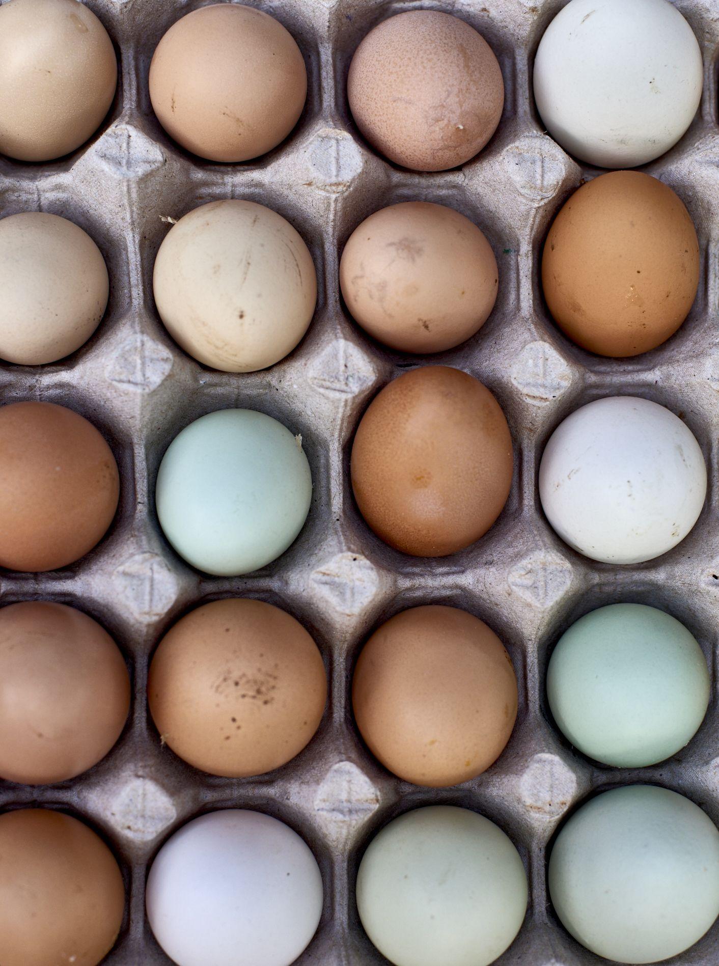 Santa Barbara Marketplace fresh eggs