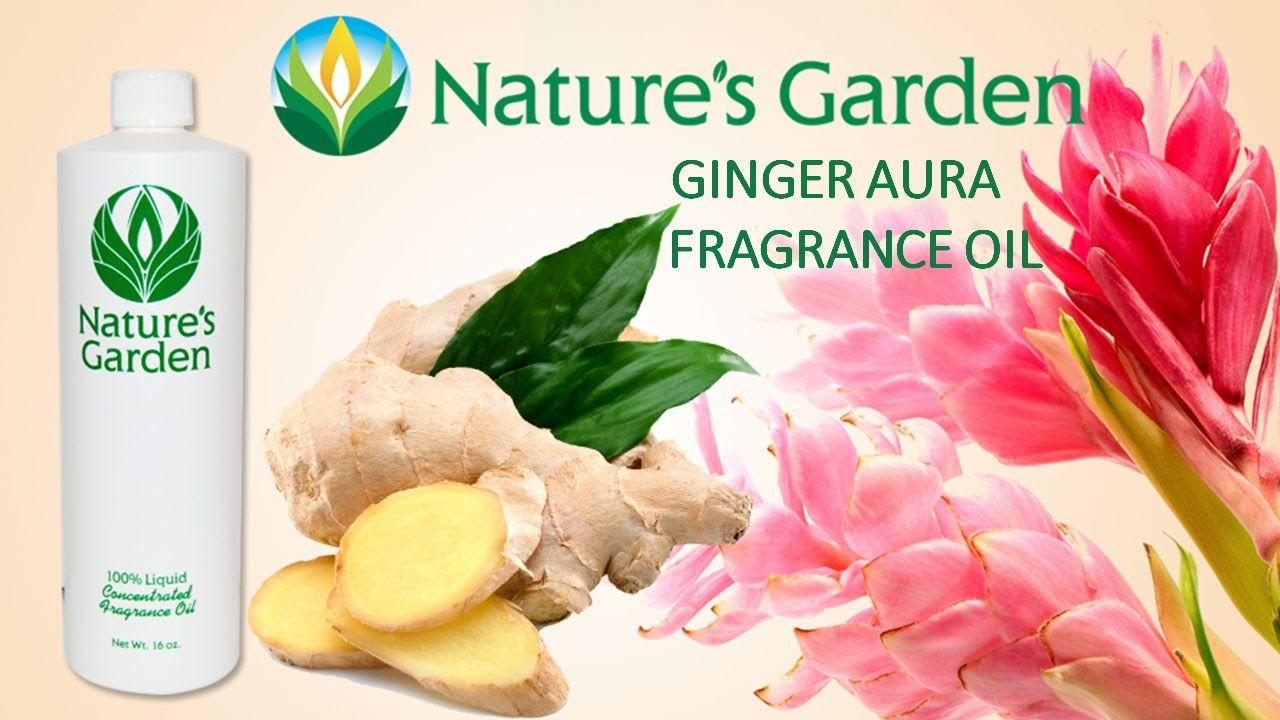Ginger Aura Fragrance Oil Natures Garden Fragrance Oil Nature Garden Fragrance