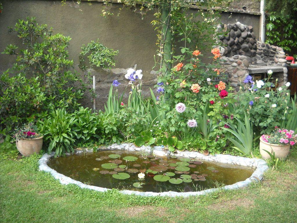 Pin de estela pereyra en jardin estanque plantas Estanque natural como hacerlo