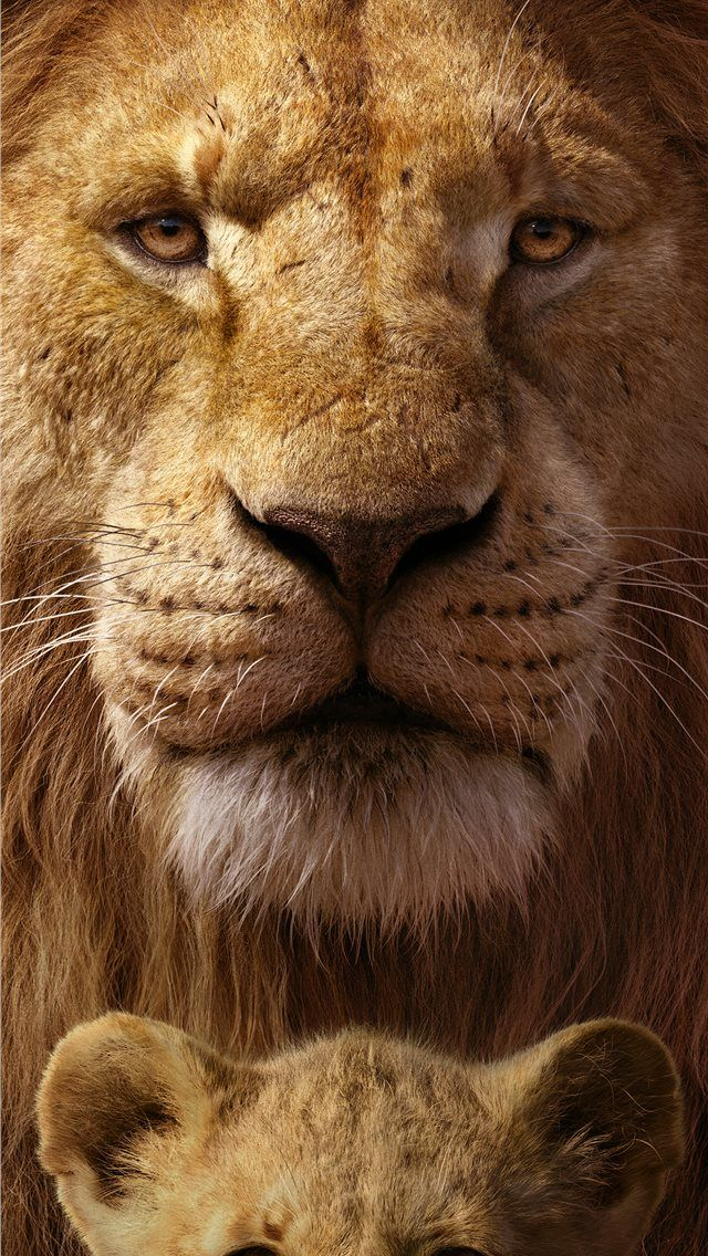 the lion king 8k iPhone Wallpapers in 2020 Lion pictures