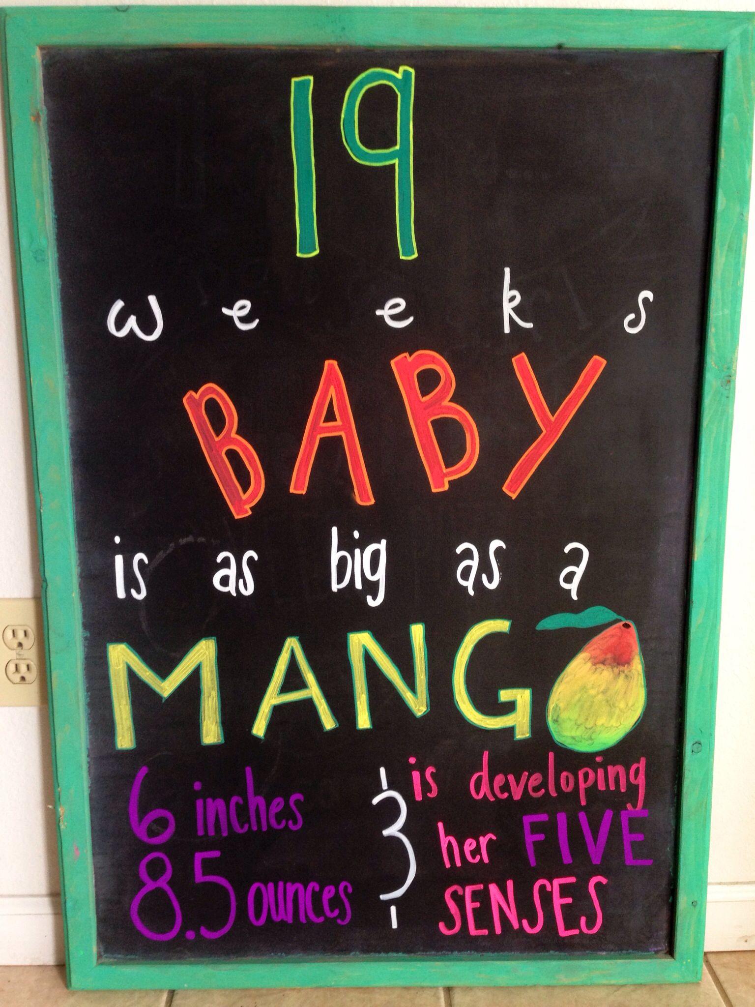 19 Weeks Pregnant Chalkboard Template Baby Kiss Gender Reveal
