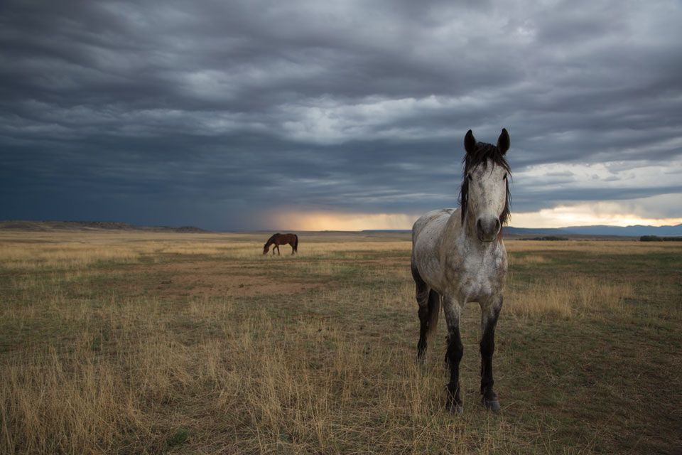 These Photos Will Make You Want to Quit Your Job and Ride a Wild Mustang From Mexico to Canada