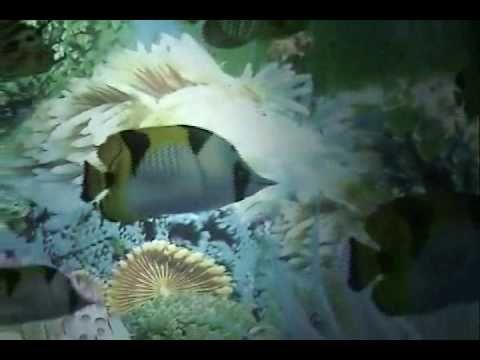 JOHNNY NASH  (MR. SEA) - YouTube
