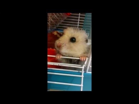 Hamster hiccup https://www.youtube.com/watch?v=jCBZ6lsO4xU