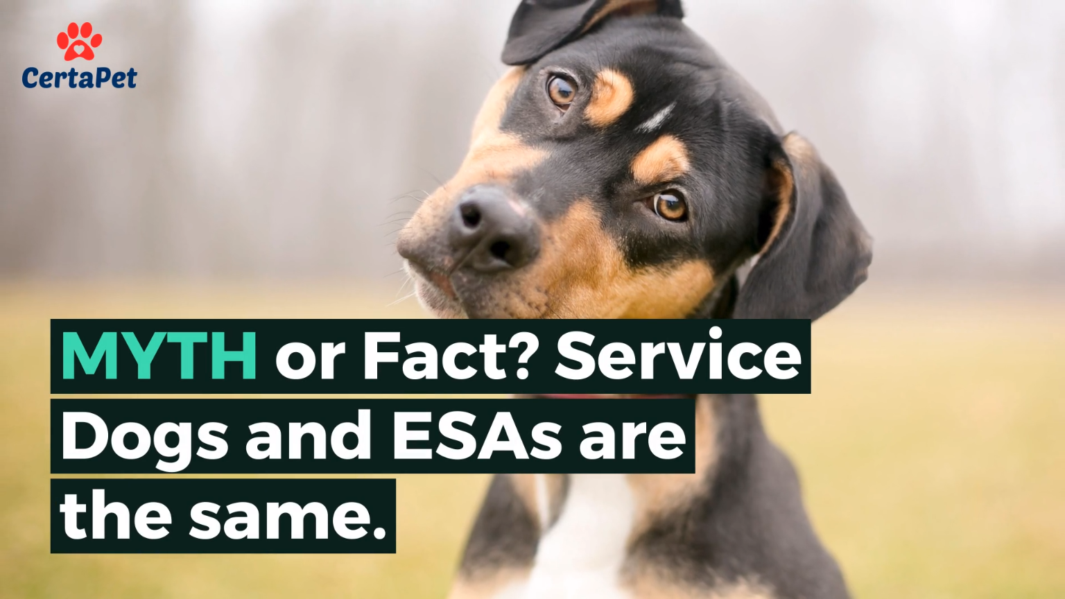 Image of: Landlord Watch This Video To Learn More About Emotional Support Animals Or Visit Us On Our Website certapet Dogtime Did You Know Service Dogs And Esas Are Not The Same Both Fulfill
