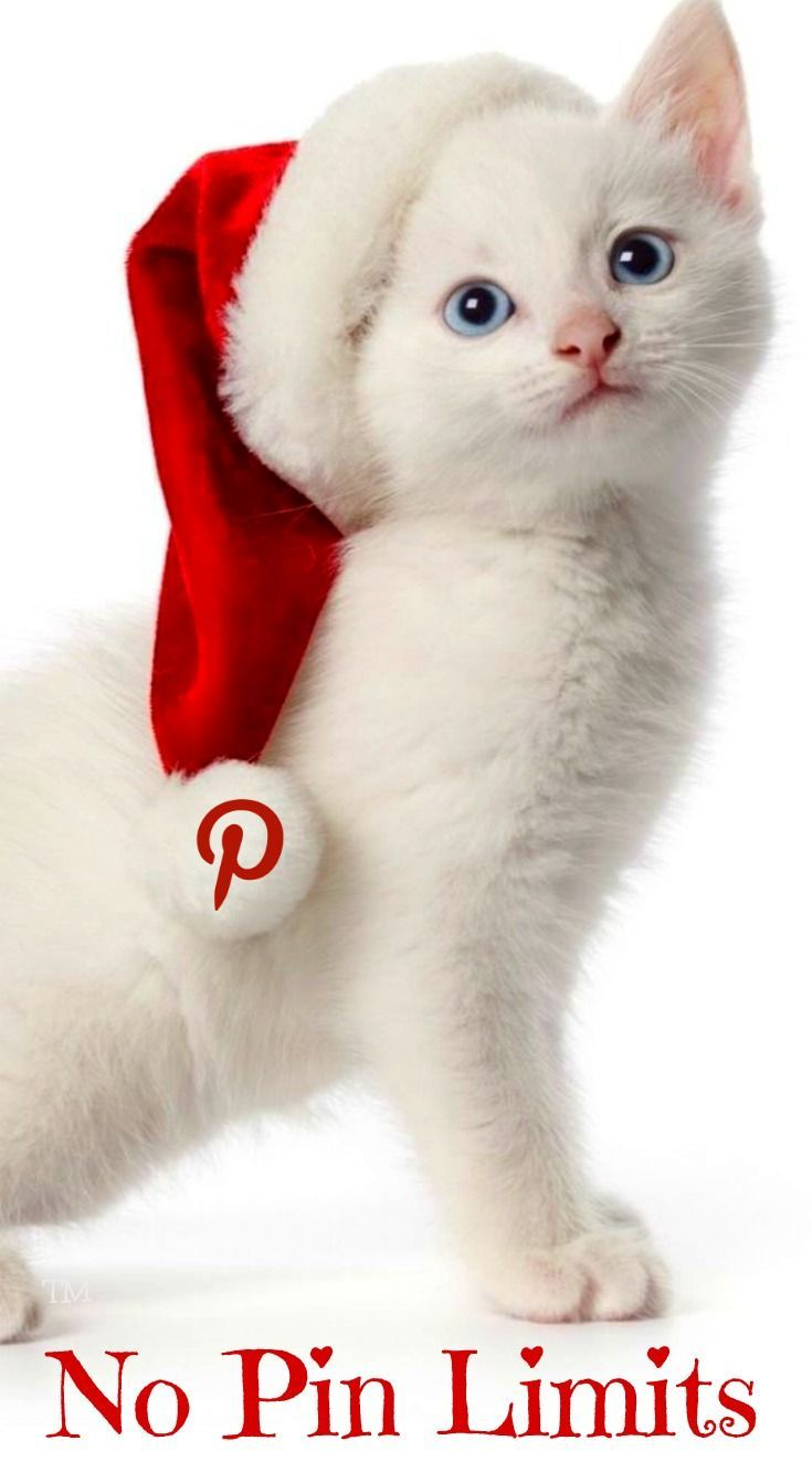 Ngela pinning no limits pinterest cat