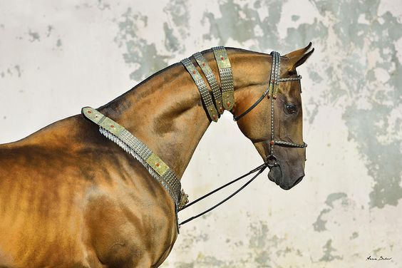 Magnificent Akhal Teke by Artur Baboev