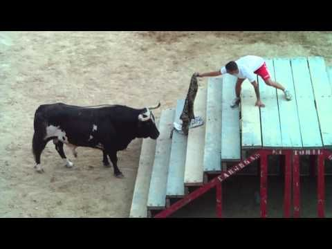TORO RATON EN RICLA (zaragoza),part.1 - YouTube