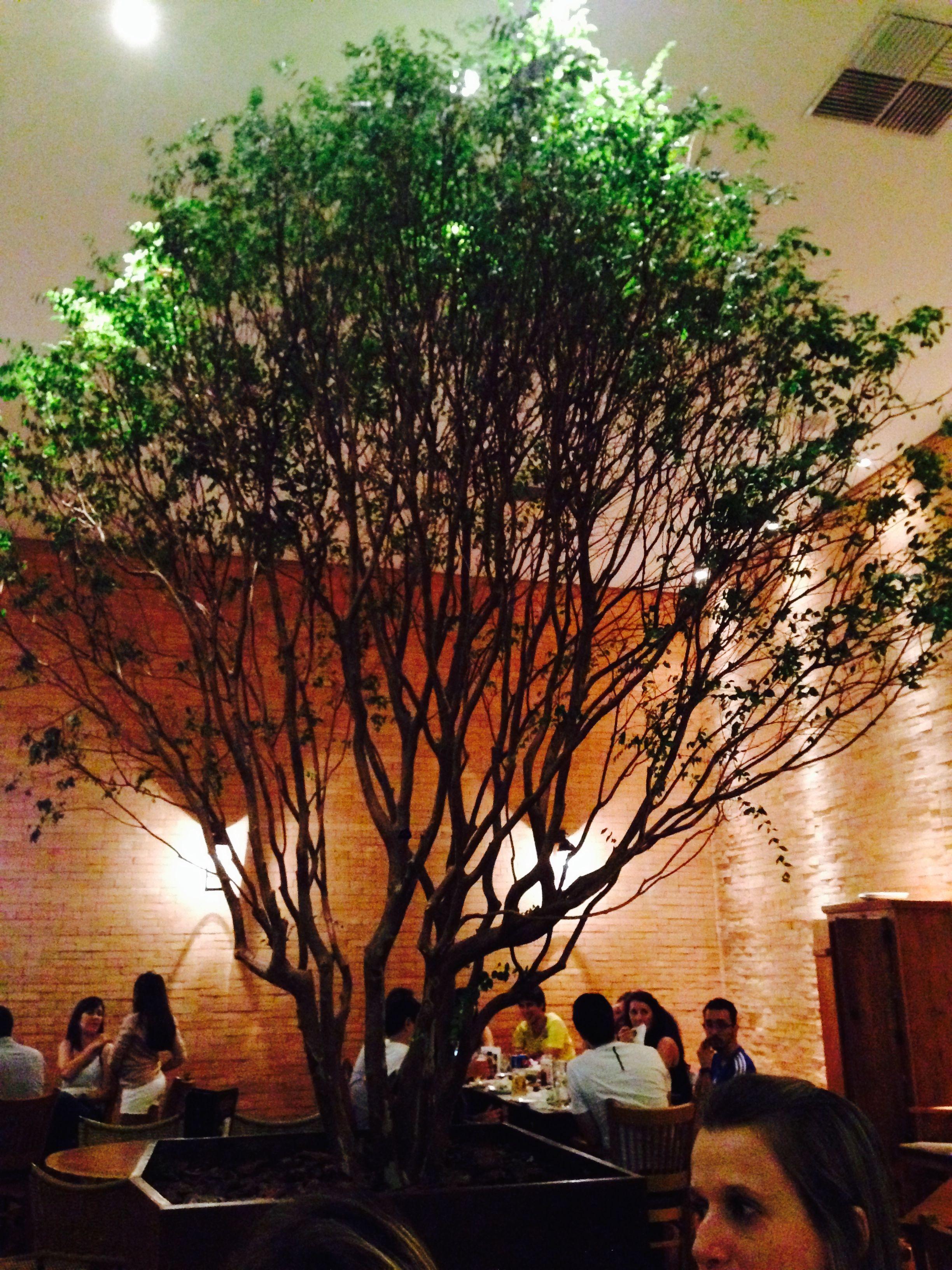 E no meio do restaurante tinha uma árvore <3