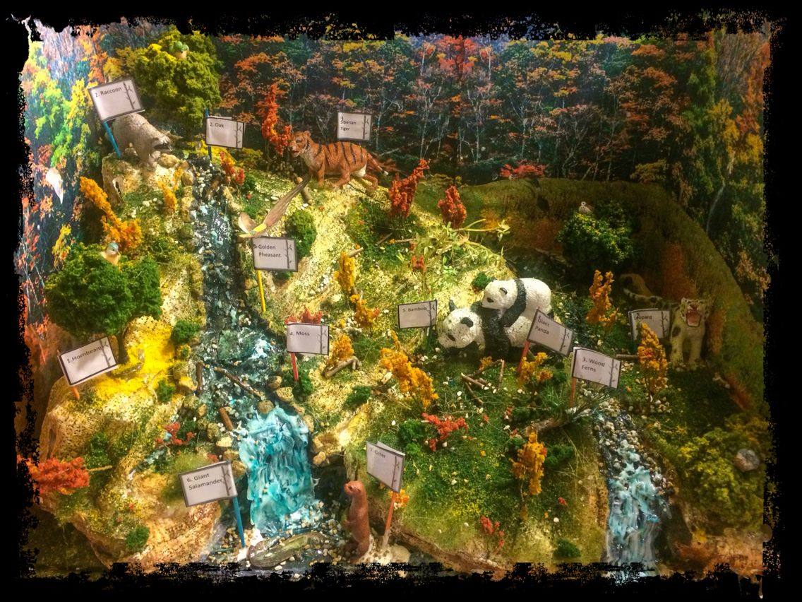 Diorama Of Chinese Temperate Deciduous Forest 5th Grade Project Can Explain How We Made It If