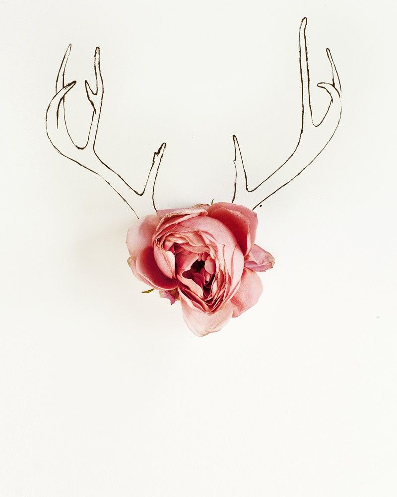 Antler drawing and flower photograph by Kari Herer.  Above crib.