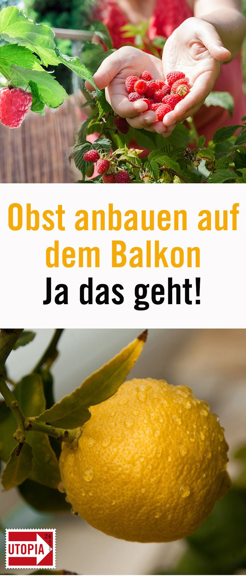 Obst auf dem Balkon: Diese 10 Früchte gedeihen auch im Kübel #balkonblumen