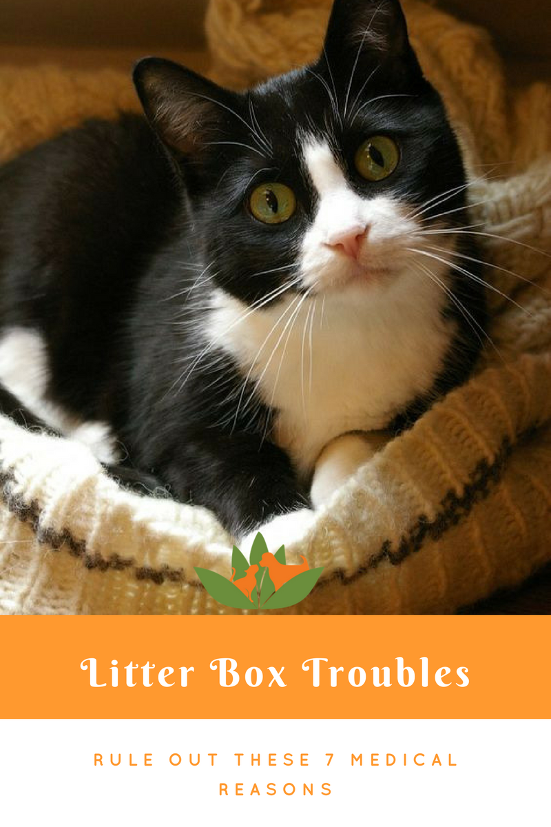 What Urinating Outside The Litter Box Can Mean For Your Cat Rule Out These 7 Medical Reasons First Cute Cats Kittens Cute Cats And Kittens