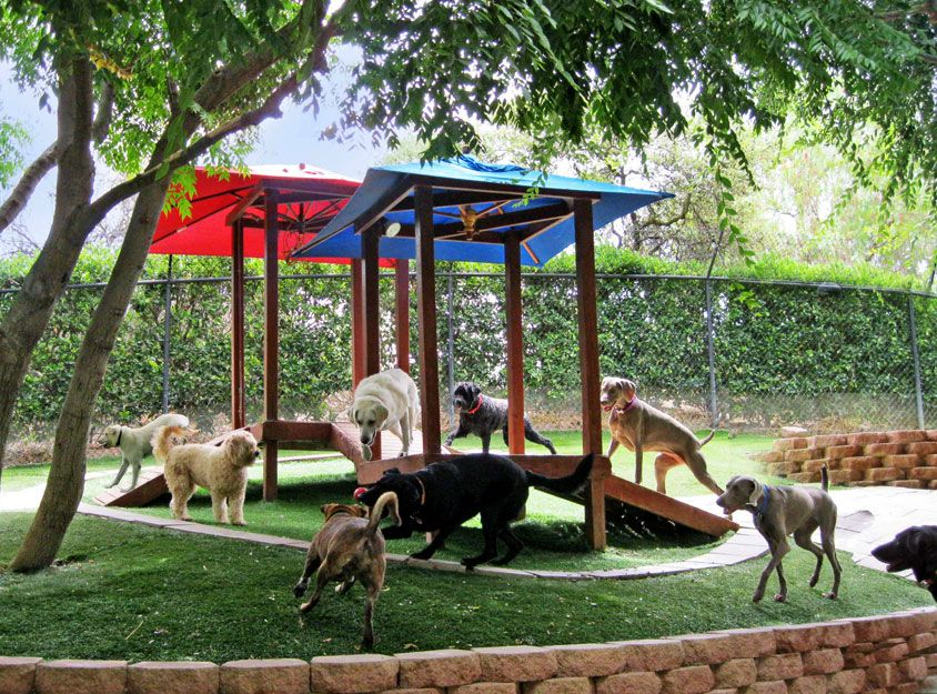 Canyon view ranch for dogs in topanga canyon dog