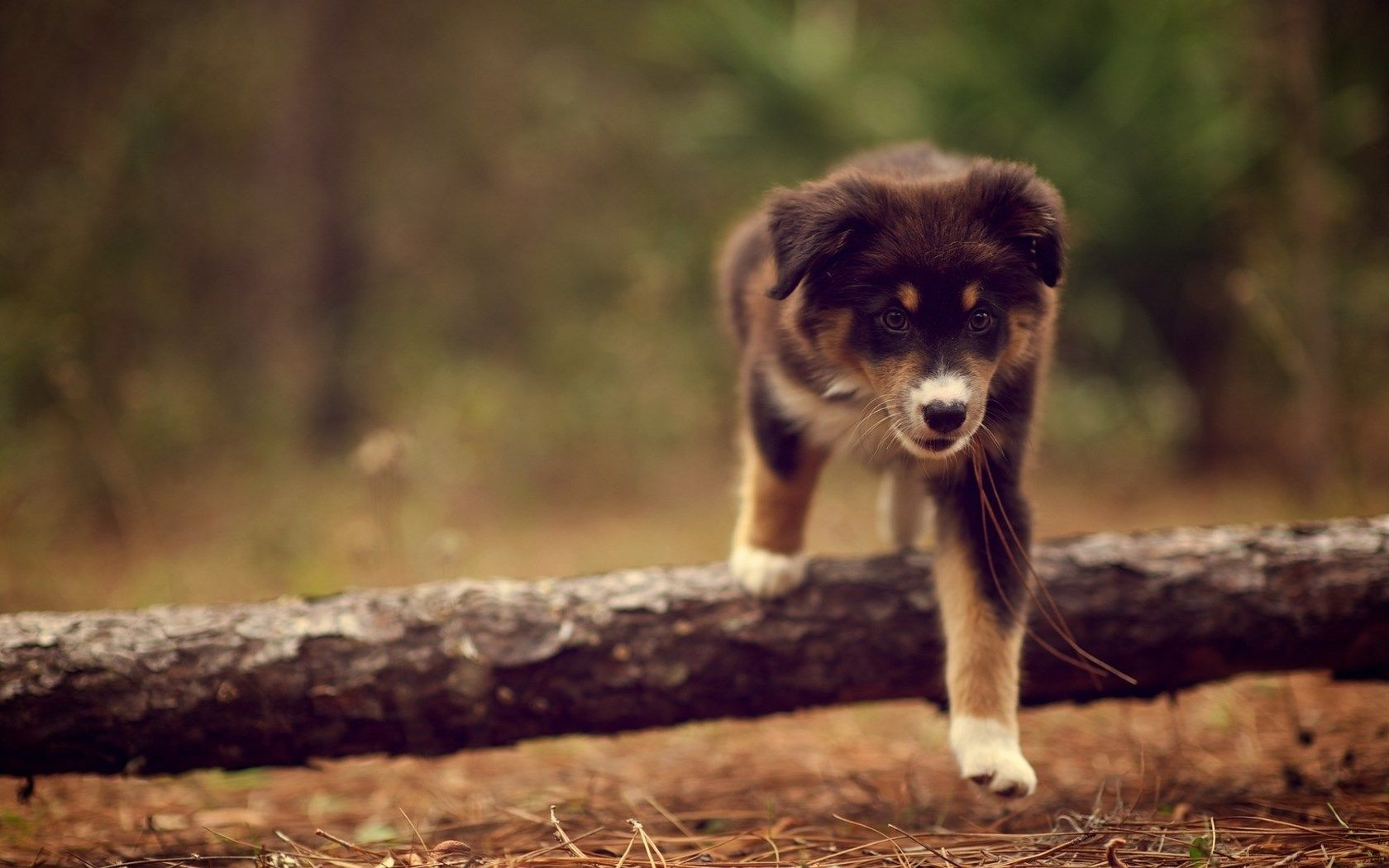 dog pic high definition backgrounds