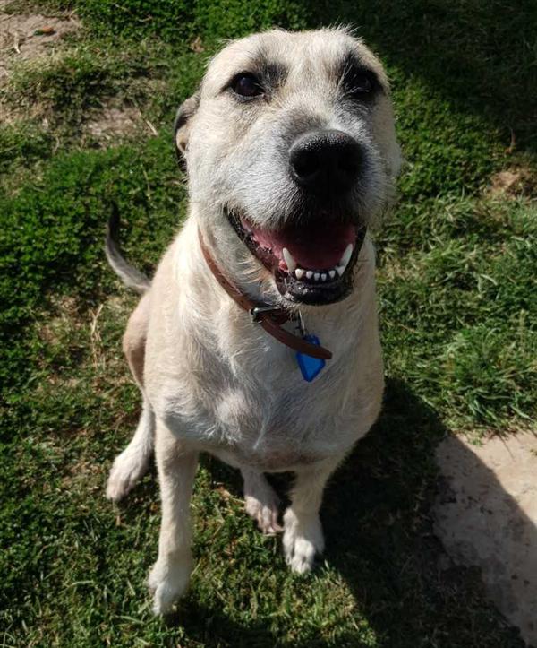 Loot Rspca Adopt A Pet Lap Dogs Pets Dog Breeds